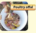 Poultry Offal